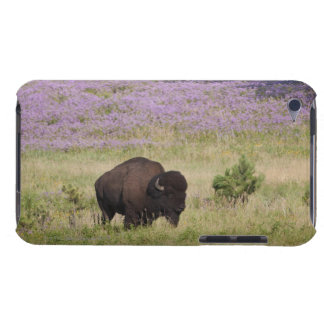 USA, South Dakota, American bison (Bison bison) Barely There iPod Case