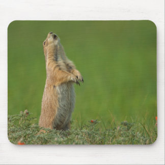 USA, South Dakota, Custer State Park Mouse Pads