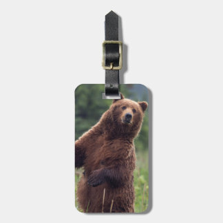 USA, Southeast Alaska, Brown Bear and cub Bag Tag