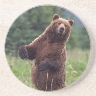 USA, Southeast Alaska, Brown Bear and cub Coasters