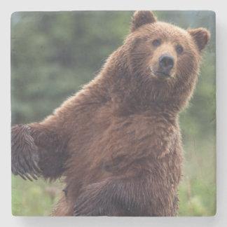 USA, Southeast Alaska, Brown Bear and cub Stone Beverage Coaster