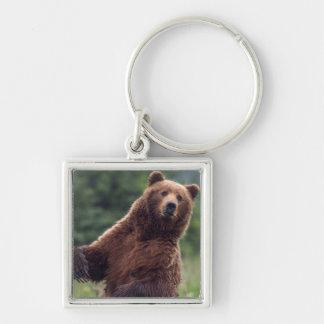 USA, Southeast Alaska, Brown Bear and cub Key Ring