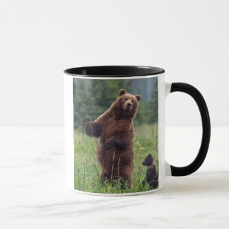 USA, Southeast Alaska, Brown Bear and cub Mug