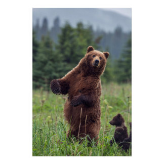 USA, Southeast Alaska, Brown Bear and cub Poster