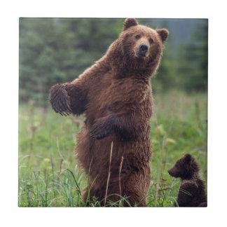 USA, Southeast Alaska, Brown Bear and cub Tile