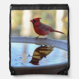 USA, Tennessee, Athens. Backyard Bird Bath 2 Backpack