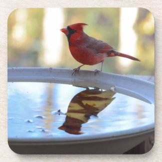 USA, Tennessee, Athens. Backyard Bird Bath 2 Drink Coaster