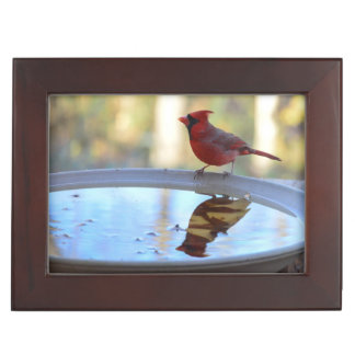 USA, Tennessee, Athens. Backyard Bird Bath 2 Keepsake Box