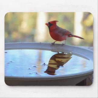 USA, Tennessee, Athens. Backyard Bird Bath 2 Mouse Pad