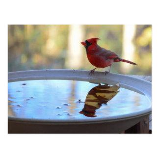 USA, Tennessee, Athens. Backyard Bird Bath 2 Postcard
