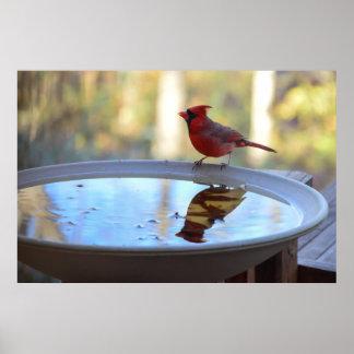 USA, Tennessee, Athens. Backyard Bird Bath 2 Print