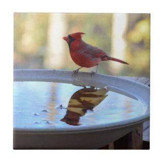 USA, Tennessee, Athens. Backyard Bird Bath 2 Small Square Tile