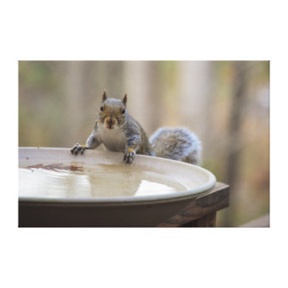 USA, Tennessee, Athens. Backyard Bird Bath Canvas Prints