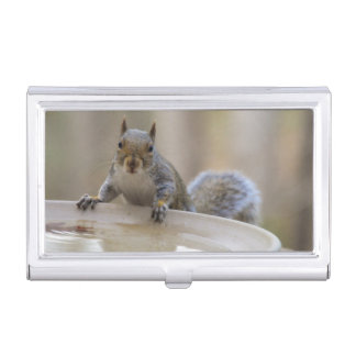 USA, Tennessee, Athens. Backyard Bird Bath Case For Business Cards
