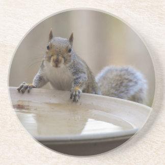USA, Tennessee, Athens. Backyard Bird Bath Drink Coaster