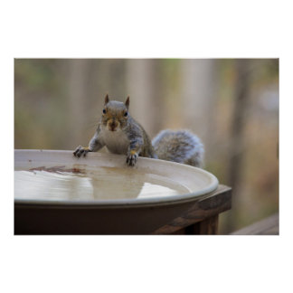 USA, Tennessee, Athens. Backyard Bird Bath Poster