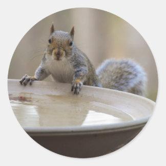 USA, Tennessee, Athens. Backyard Bird Bath Round Sticker