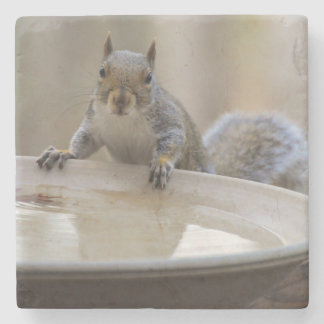 USA, Tennessee, Athens. Backyard Bird Bath Stone Beverage Coaster