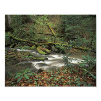 USA, Tennessee. Big South Fork National River Art Photo