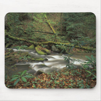 USA, Tennessee. Big South Fork National River Mouse Pad