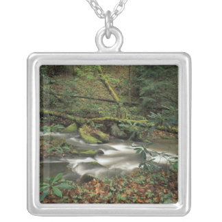 USA, Tennessee. Big South Fork National River Silver Plated Necklace