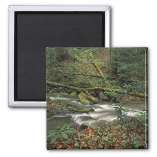 USA, Tennessee. Big South Fork National River Square Magnet