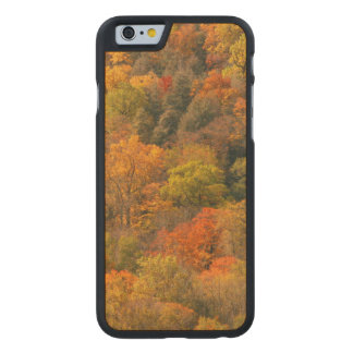 USA, Tennessee. Fall Foliage 2 Carved Maple iPhone 6 Case