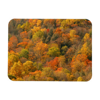 USA, Tennessee. Fall Foliage 2 Magnet