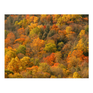 USA, Tennessee. Fall Foliage 2 Postcard
