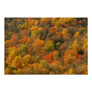 USA, Tennessee. Fall Foliage 2 Poster