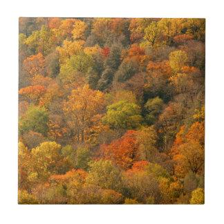 USA, Tennessee. Fall Foliage 2 Tile