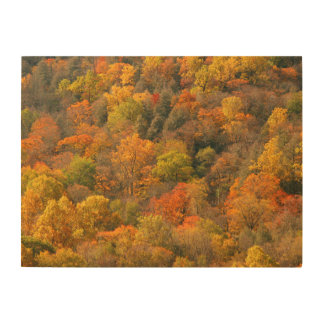 USA, Tennessee. Fall Foliage 2 Wood Wall Art