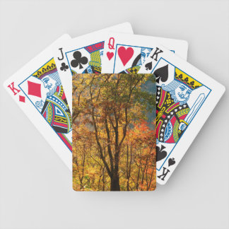 USA, Tennessee. Fall Foliage Bicycle Playing Cards