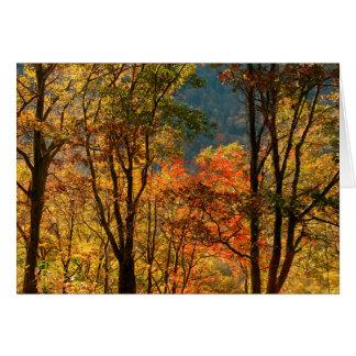 USA, Tennessee. Fall Foliage Card
