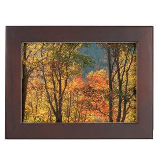 USA, Tennessee. Fall Foliage Keepsake Box