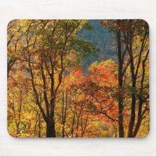 USA, Tennessee. Fall Foliage Mouse Mat