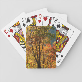 USA, Tennessee. Fall Foliage Playing Cards