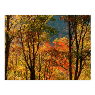 USA, Tennessee. Fall Foliage Postcard