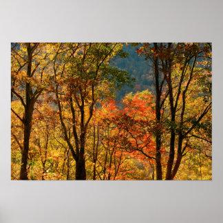 USA, Tennessee. Fall Foliage Poster