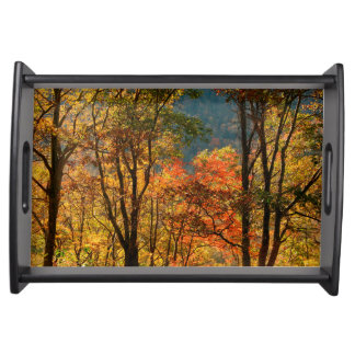 USA, Tennessee. Fall Foliage Serving Tray