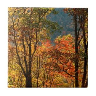 USA, Tennessee. Fall Foliage Tile