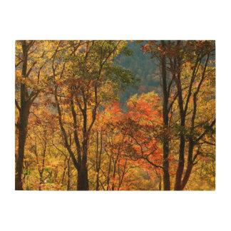 USA, Tennessee. Fall Foliage Wood Canvas