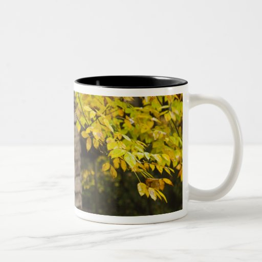 USA, Tennessee, Gatlinburg. Great Smoky Coffee Mugs