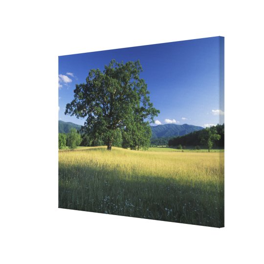 USA, Tennessee. Great Smokey Mountains 2 Canvas Print