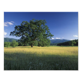 USA, Tennessee. Great Smokey Mountains 2 Photographic Print