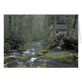 USA, Tennessee, Great Smoky Mountains National 3 Card