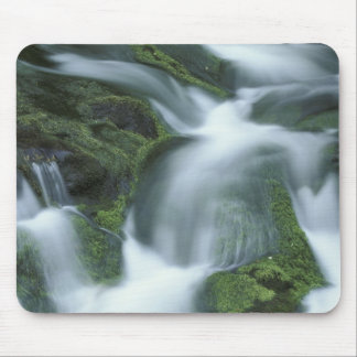 USA, Tennessee, Great Smoky Mountains NP. Mouse Mat