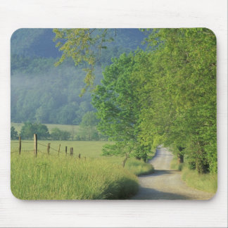 USA, Tennessee, Great Smoky Mountains NP, Mouse Mat