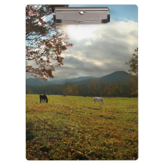USA, Tennessee. Horses In Cades Cove Valley Clipboard