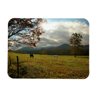 USA, Tennessee. Horses In Cades Cove Valley Magnet